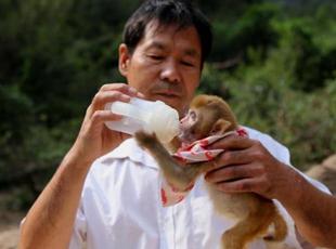 满月野猴不幸丧母 护林工捡回细心呵护