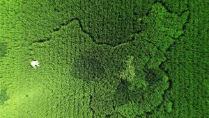 老人培育400种水稻 种'中国地图'迎国庆