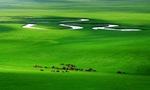 内蒙古每年将获国家草原补奖资金45亿多元