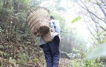贵州普定坚守深山43年的苗族护林人