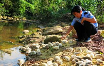 越南妇女走私60余只野生刺猬 广西海关查获放生