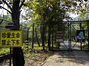 八达岭老虎致游客死伤事件发酵 记者实地探究竟
