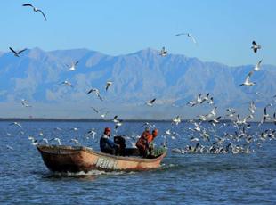 金秋鸥鸟共舞博斯腾湖 勾勒自然和谐美丽画卷