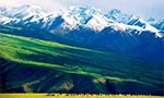 伊犁河谷喀拉峻:草原新景观