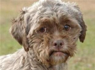 日本一条狗因为长得太像人类 无人敢领养