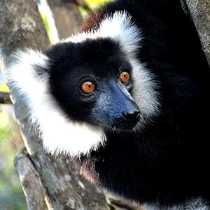 马达加斯加的动物世界 展示生命的神奇与[组图]
