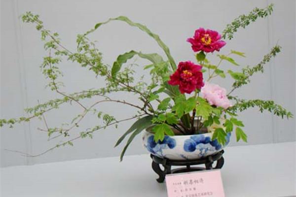 牡丹插花艺术欣赏