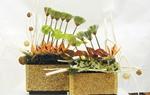 10种插花欣赏