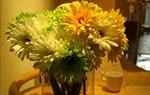 非洲菊的插花欣賞