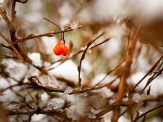 冬天养花应注意哪些问题?