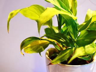 办公室植物有何常见问题?
