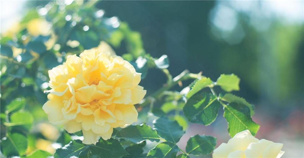听花:鲜花如约盛放 把最美的那朵送给你