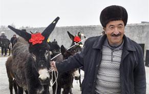 新疆阿克陶:毛驴进农家村民笑开颜