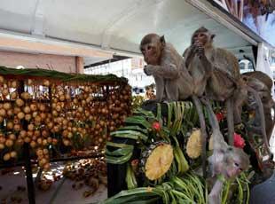 泰国猴子自助餐节 猴群乐享美食调戏游客