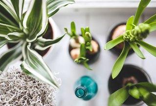 植物应用—立体花坛