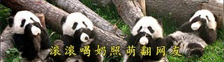 大熊猫幼仔学会抱奶瓶喝奶 萌翻了