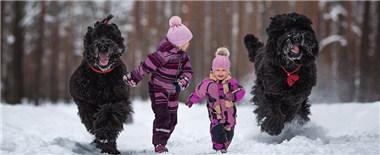 摄影师耗时4个月拍摄萌娃与大犬亲密照
