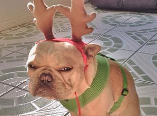 宠物的心思主人不懂:我们其实讨厌过圣诞节