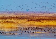 中国湿地资源情况