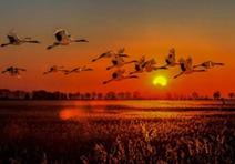 建立自然保护区的条件