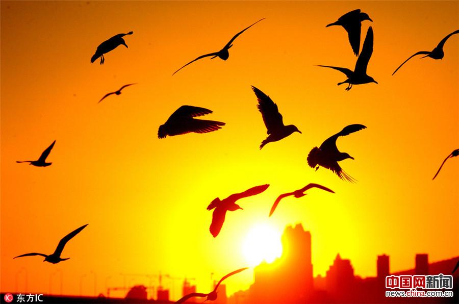 大连迎来晴好天气 鸥舞夕阳引游人驻足