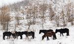 走进美丽的冰雪童话世界--武山大草原