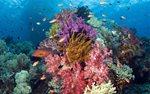 全球变暖趋势若持续 99%的珊瑚礁或将白化