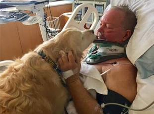 男子摔倒瘫在屋外 狗趴身上暖了他20个小时