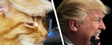"""神相似:盘点与特朗普""""撞脸""""的那些明星动物"""