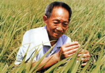 杂交水稻之父:袁隆平
