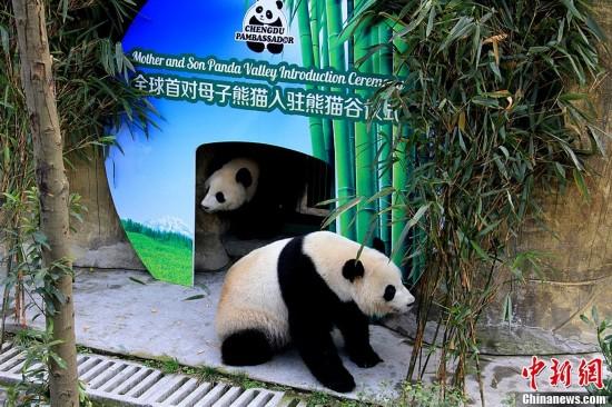"""""""强烈谴责上海野生动物园,并要求彻查到底,两只大熊猫怎么染病身亡的"""