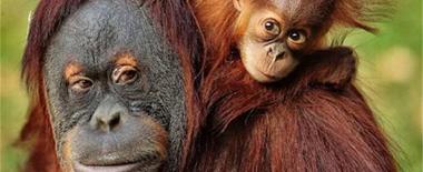 美澳各大动物园争晒萌宝照片