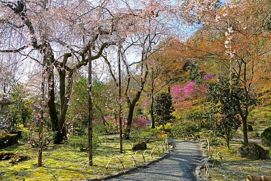 京都:天龙寺之庭院景色(三)