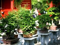 中国:景山(五)