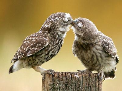 花样百出:世界各地的动物这样过情人节