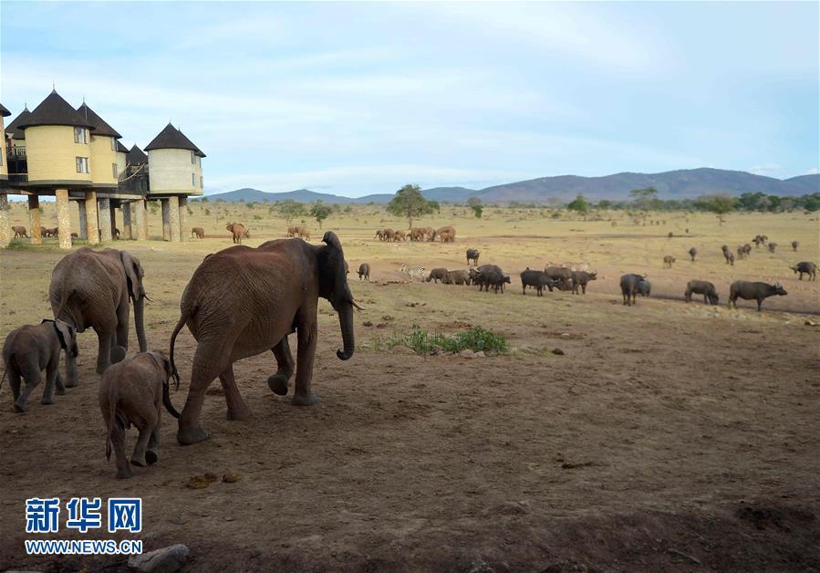 肯亞對野生動物開展監控工作