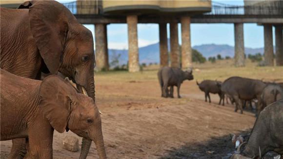 肯尼亚对野生动物开展监控工作