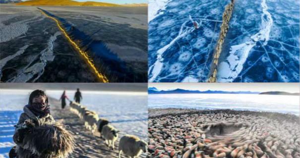 青藏高原人与自然的传奇:冰面上羊群与太阳赛跑