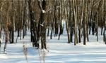 雪后新疆哈巴河县静谧悠然