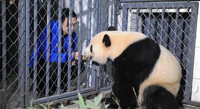 旅美大熊猫顺利回到中国大熊猫保护研究中心