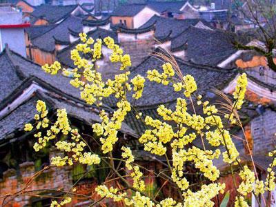 湖南永州零陵发现明清古建筑群