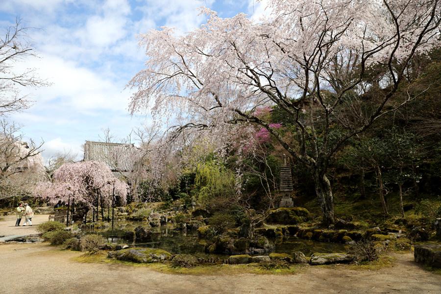 奈良:吉野山竹林院(五)