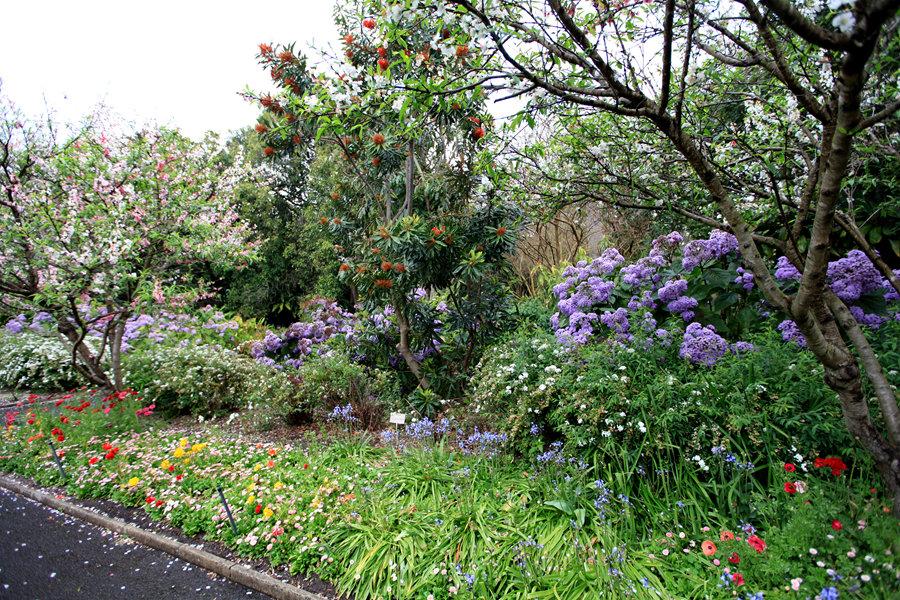 澳大利亚:悉尼皇家植物园之花园景观(五)