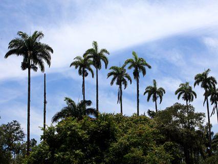 里约:植物园