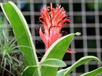 巴西:里约植物园