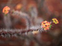 澳大利亚:悉尼皇家植物园