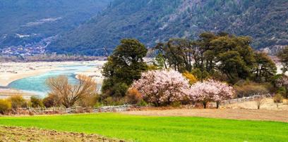 藏东南:那片十里桃花盛开的地方(组图)