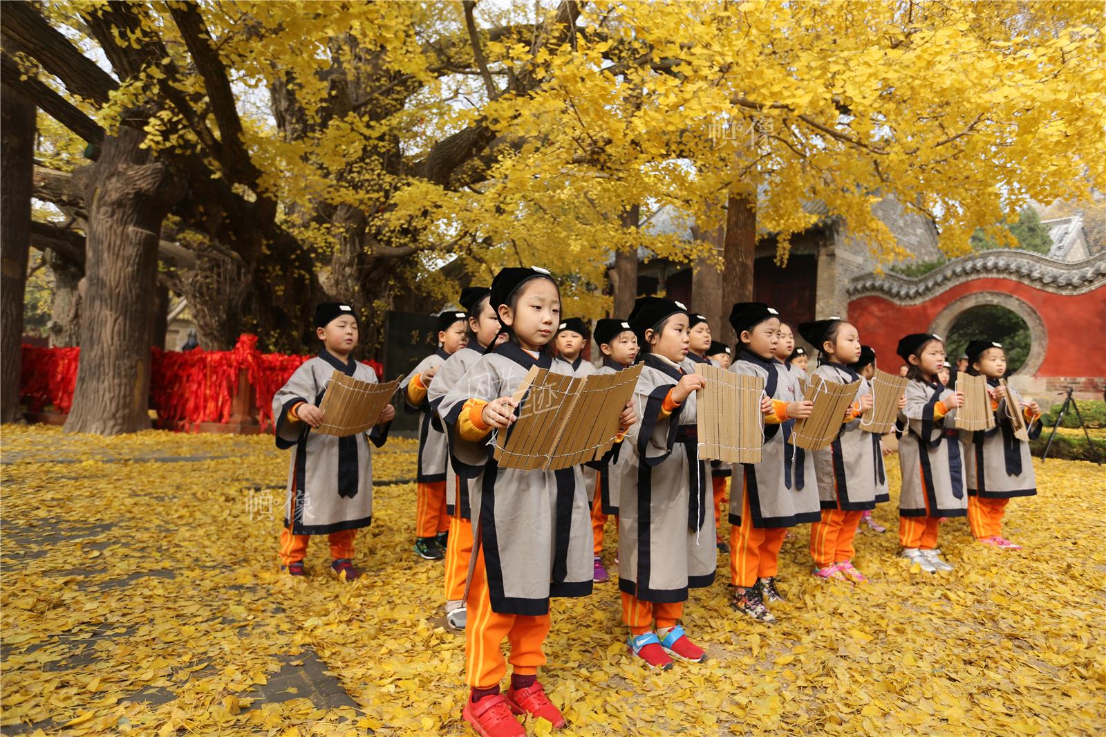 """2016年11月11日,山东莒县浮来山,孩子们站在4000余年的银杏树下吟诵""""弟子规""""。东方IC"""