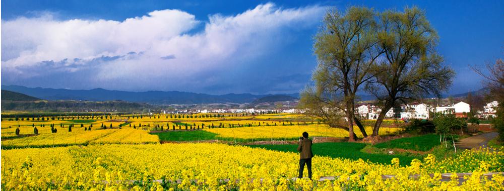 十里桃林不如陕西洋县花海:大地最美颜色
