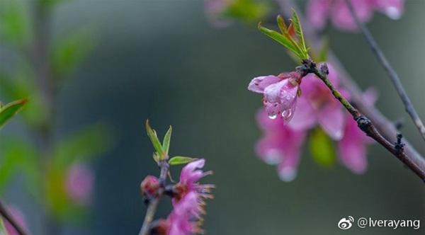 南方【4省区】有暴雨 北方或重回冬日寒冷